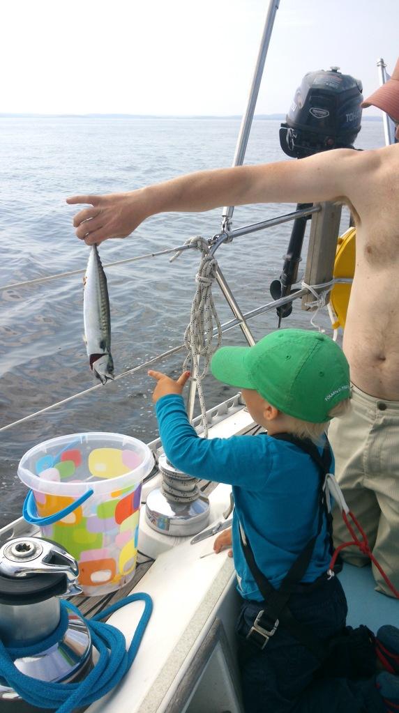 Makrellfiske
