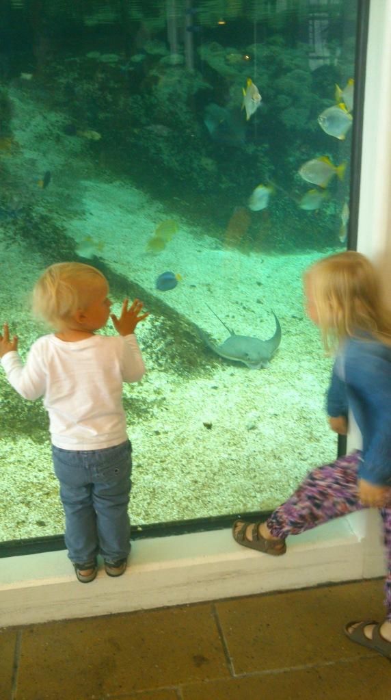 Spennende på aquarium