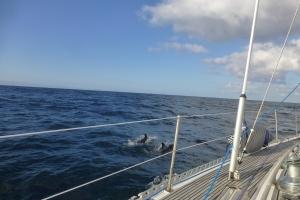 Delfiner i sikte. Herlig opplevelse på havet.